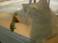 猫とセミの羽化その3